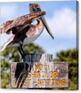 No Fishing Baby Pelican Canvas Print