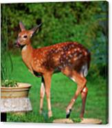 No I'm Not Bambi Canvas Print