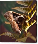 Nocturnal Moth Canvas Print