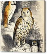Nocturnal Scene With Three Owls Canvas Print