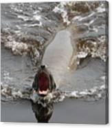Noisy Sea Lion Canvas Print