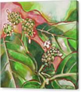 Noni Canvas Print