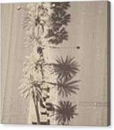 Noon Palms Canvas Print