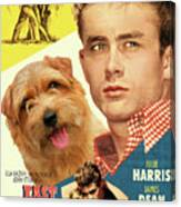 Norfolk Terrier Art Canvas Print - East Of Eden Movie Poster Canvas Print