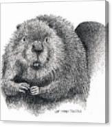 North American Beaver Canvas Print