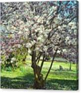 North American Magnolia Tree Canvas Print