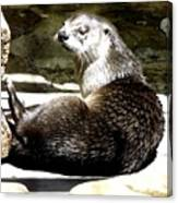 North American River Otter Canvas Print