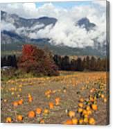 North Arm Farm Pumpkin Season Pemberton B.c Canada Canvas Print