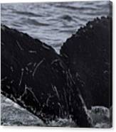 North Atlantic Humpback Canvas Print