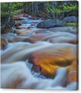North Branch Rapid In Spring  Canvas Print