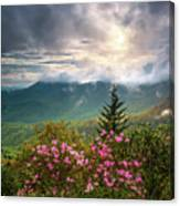 North Carolina Spring Flowers Blue Ridge Parkway Scenic Landscape Asheville Nc Canvas Print