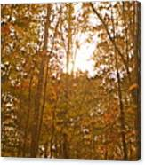 North Carolina Woods Canvas Print