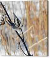 North Pond Prairie Grass Canvas Print
