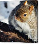 North Pond Squirrel Canvas Print