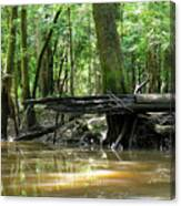 North West Florida Swamp Canvas Print