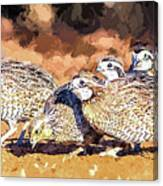Northern Bobwhite Digital Art  Canvas Print