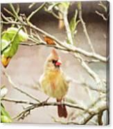 Northern Cardinal Female - Digital Painting Canvas Print