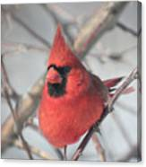 Northern Cardinal In The Apple Tree 2 Canvas Print