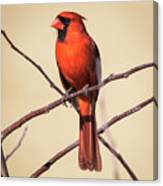 Northern Cardinal Profile Canvas Print