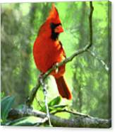 Northern Cardinal Proud Bird Canvas Print
