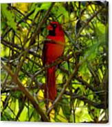 Northern Cardinal Work Number Two Canvas Print