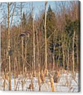 Northern Forests Ghost In-flight Canvas Print