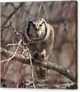 Northern Hawk Owl Having Lunch 9417 Canvas Print