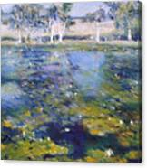 Northern New South Wales Australia 1995  Canvas Print