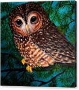 Northern Spotted Owl Canvas Print