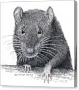 Norway Rat Canvas Print