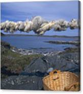 Norway Sheep Wool Getting Rolled Canvas Print