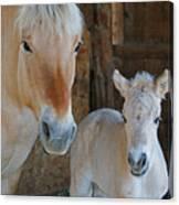 Norwegian Fjord Horse And Colt 1 Canvas Print