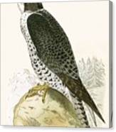 Norwegian Jer Falcon Canvas Print