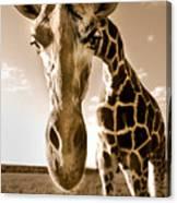 Nosey Giraffe Canvas Print