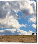 Not A Cow In The Sky Canvas Print