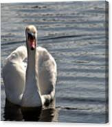 Not Another Swan Canvas Print