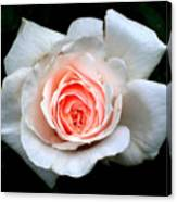Not So Perfect White Rose Canvas Print