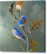 Nothing But Bluebirds Canvas Print
