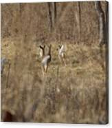 Nothing But White Tails Canvas Print