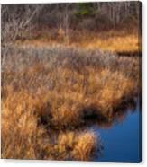 November Brook And Wetland Barren  Canvas Print