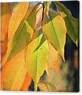 November Colors Canvas Print