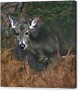 November Doe Canvas Print