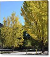 November Gold Canvas Print