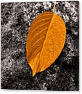 November Leaf Canvas Print