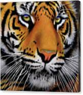 November Tiger Canvas Print