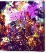 Nudibranch Flabellina Slug Seaslug  Canvas Print
