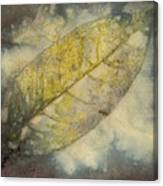 Number 46 Canvas Print