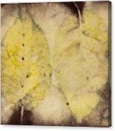 Number 55 Canvas Print