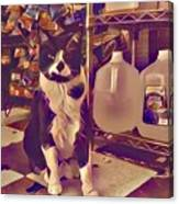 Nyc Bodega Cat Canvas Print