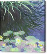 Nympheas Avec Reflets De Hautes Herbes Canvas Print